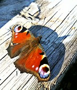 butterfly-1066404__180