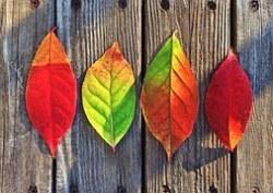 leaves-1051937__180