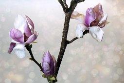 flower-3125755__340 neu