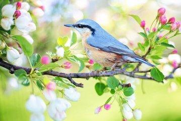 spring-bird-2295431__340 neu