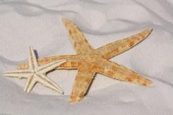 starfish-343791__340