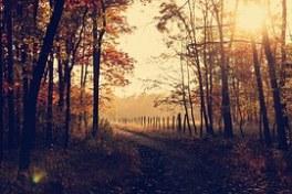 woodland-1031154__180